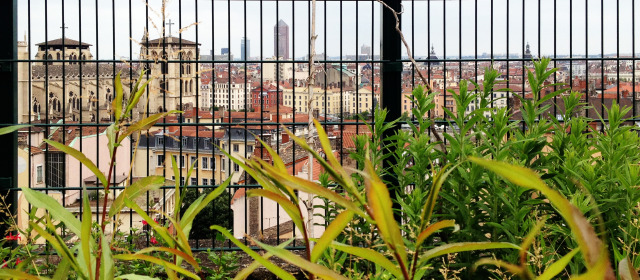 Jardins et Toits : Tour d'horizon lyonnais