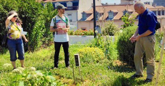 Toitures jardinées lyonnaises